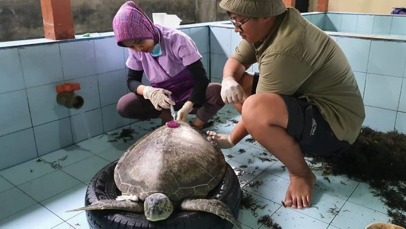 Driven by passion, young vet travels across Indonesia to rescue large marine animals