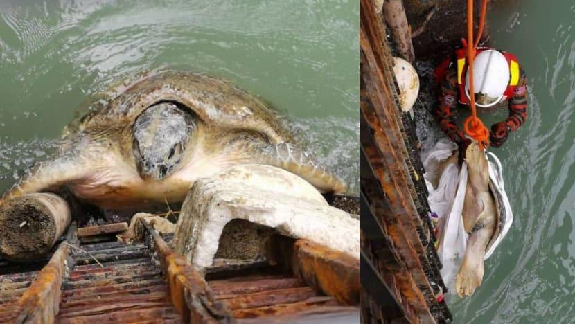 Firemen rescue turtle stuck in Malaysia rubbish trap