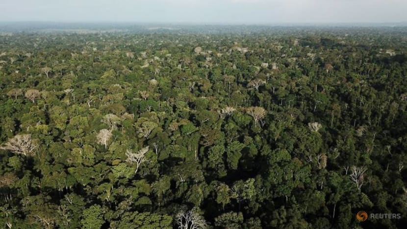 HSBC teams up with Pollination for 'natural capital' venture