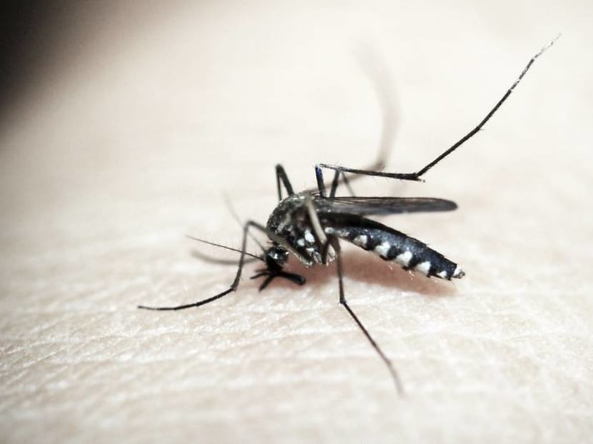 Dengue cases on the rise: What you need to know to avoid mosquito bites