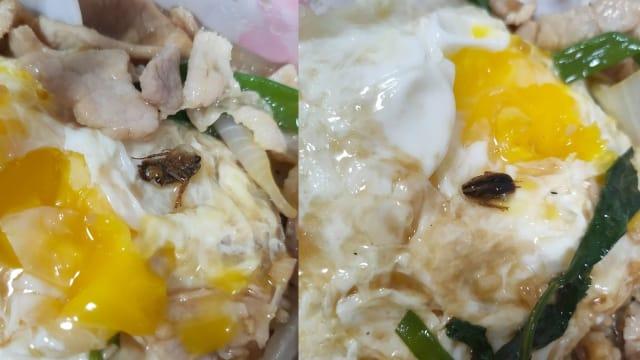 女子叫煮炒外卖饭盒里发现死蟑螂