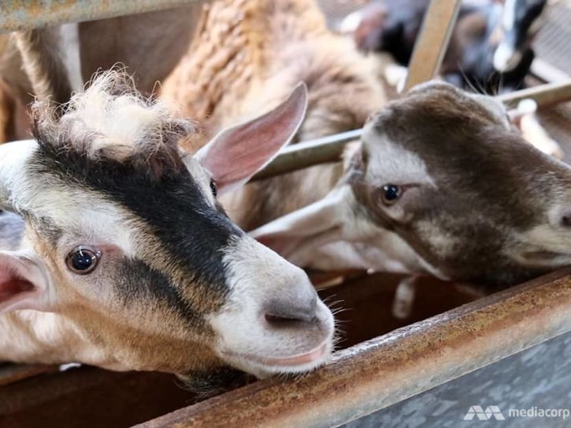 More venturing to Lim Chu Kang amid travel restrictions, but farmers say business isn't what it was