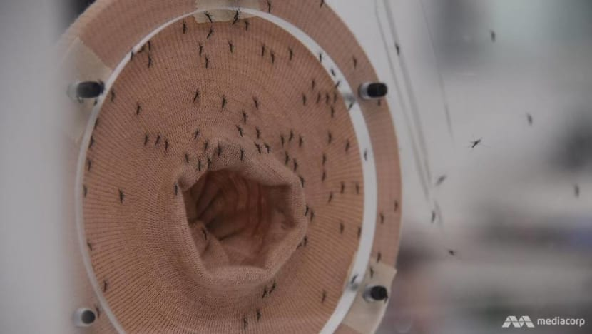 Anti-dengue Wolbachia mosquito project shows 'promising results'; to cover all Tampines, Yishun HDB towns from July