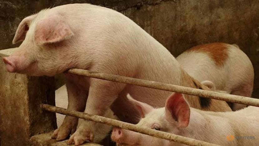 Commentary: Is swine flu going to be the next pandemic?