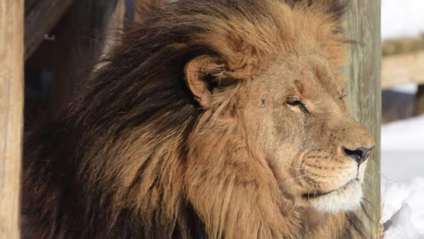 Lion kills worker at US wildlife park