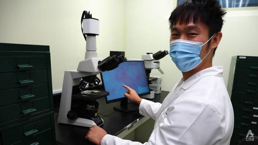 'Disease detectives': Inside Singapore's national animal health laboratory