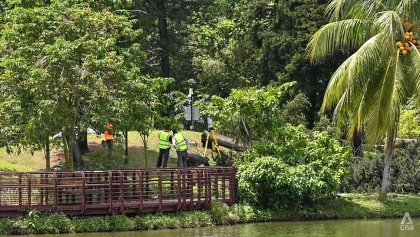 Woman dies after being trapped under fallen tree at Marsiling Park