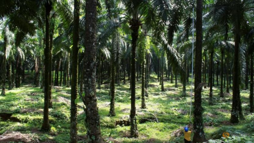 Indonesia could take back 1.4 million hectares of land from palm planters: Official