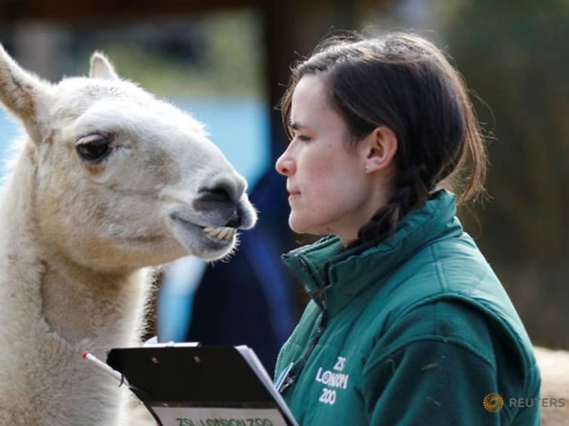 Commentary: The London Zoo helps animals with this one simple act