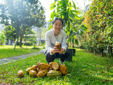 Chocolate grown in Singapore? Dessert chef Janice Wong is planting 1,000 cacao trees here