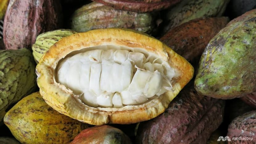 Malaysia's cocoa growers, chocolatiers seek niche in competitive market