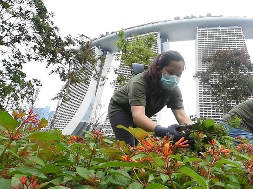 Going the extra mile to keep Gardens by the Bay neat and tidy during the COVID-19 circuit breaker