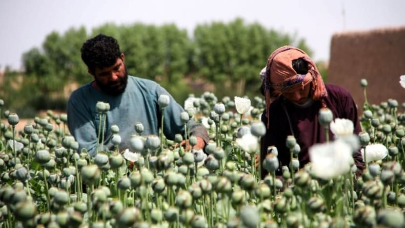Commentary: What the Afghanistan conflict means for global heroin trade