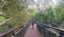 CNA explores Singapore on foot (Day 4):  Getting into hot water and searching for crocs