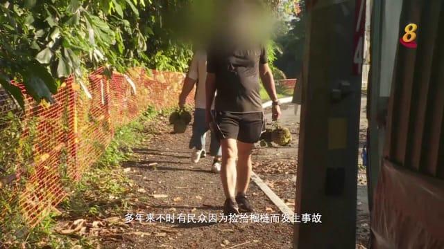 前线追踪 | 新加坡有野生榴梿?捡了会被罚款?