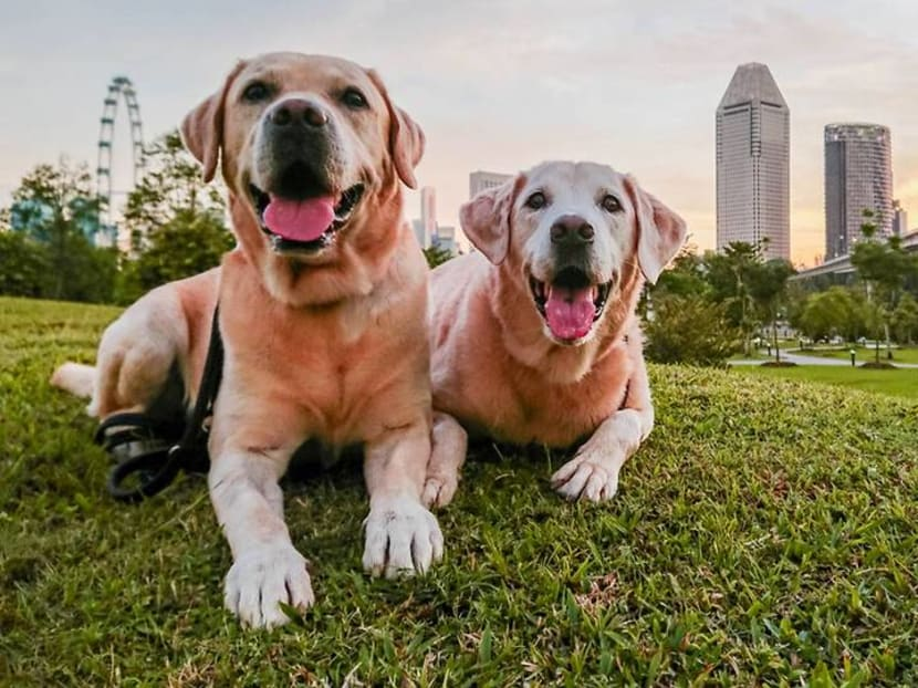 Professional tips to take better photos of your pet on your phone