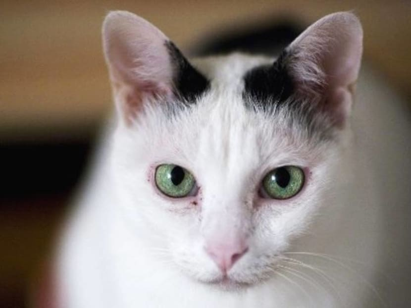 For its health and yours, keep the cat indoors: Study