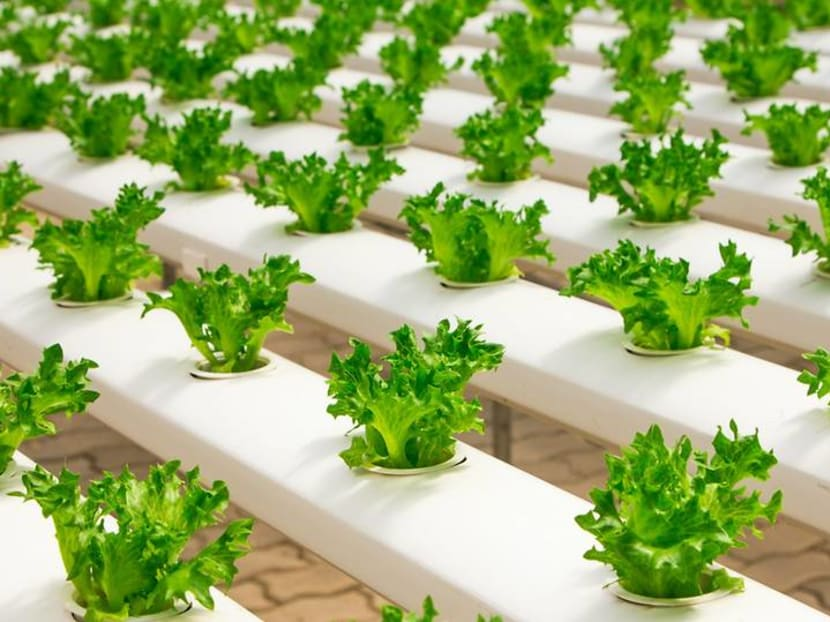 Always wanted to grow a hydroponic garden? Here's how