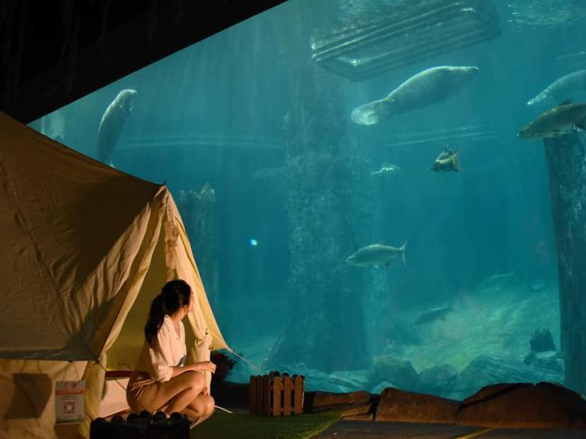 Glamping with manatees: What it's like to sleep over with the aquatic giants