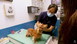 The life of vets: Busier than ever as pet ownership rises, but they can't 'walk on water'
