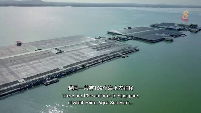 星期二特写   海水一方:海洋中的新牧场