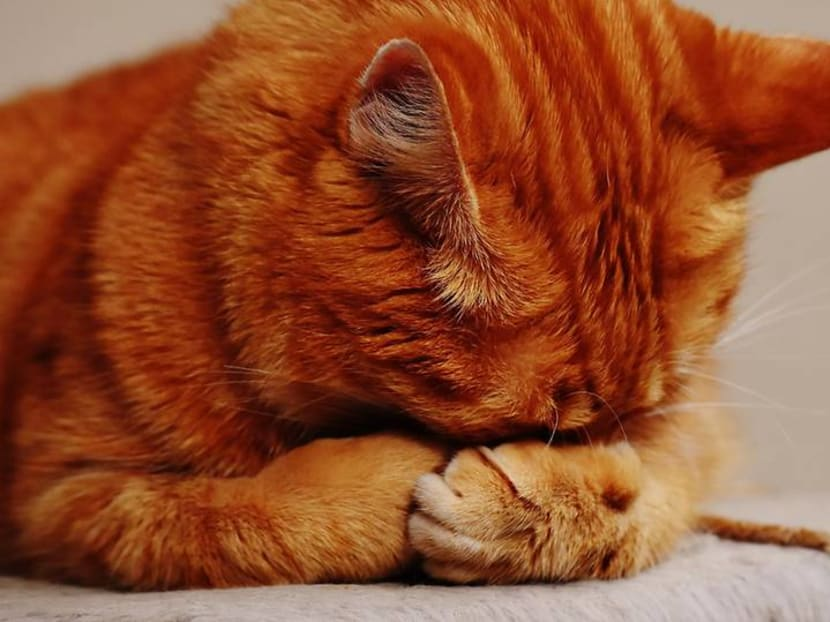 Is your pet cat or dog really happy you're at home all the time – or stressed out?