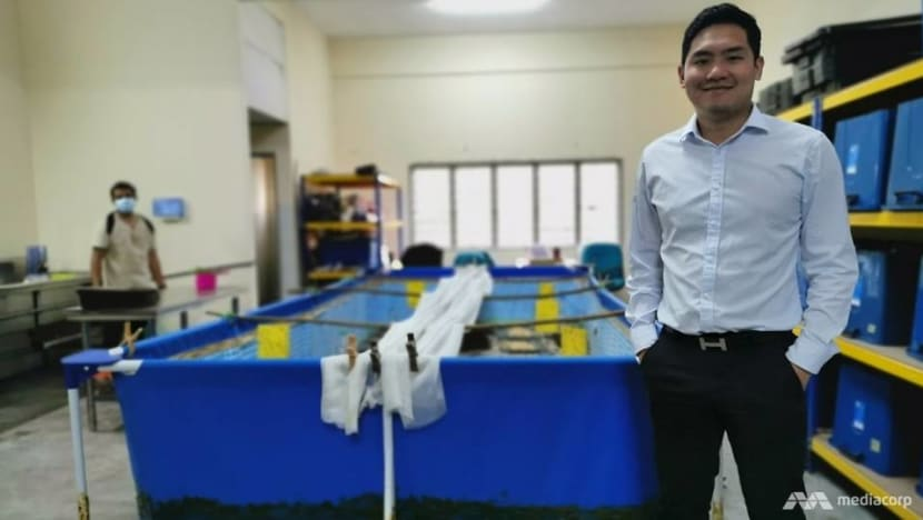 From lawyer to insect farmer: Malaysian entrepreneur touts roasted crickets as healthy, sustainable snack