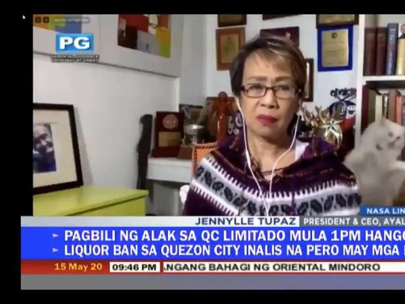 Filipino reporter has to deal with fighting cats behind her during live interview