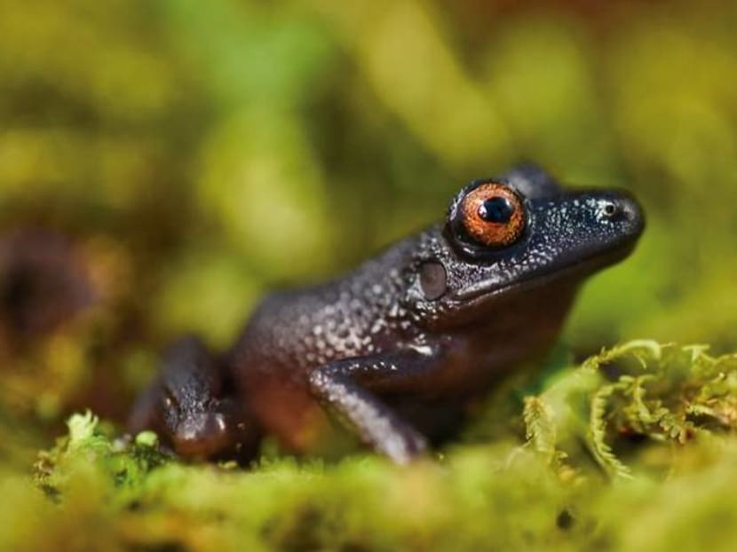 New and rediscovered species found in pristine Andes of Bolivia