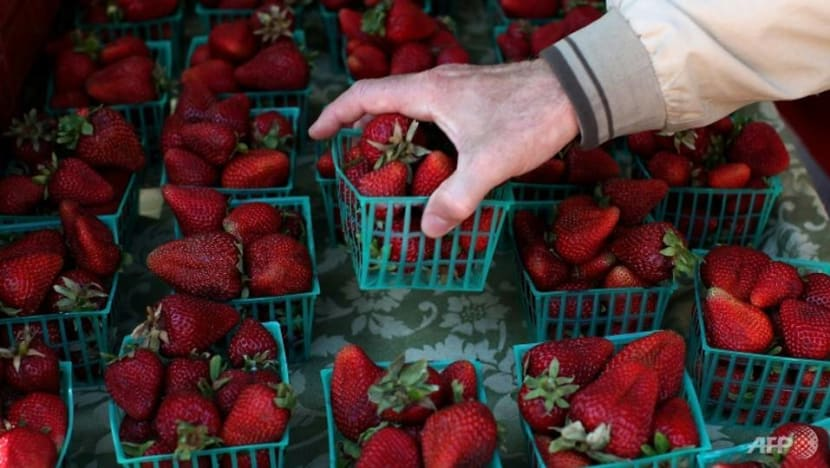 Second needle incident in strawberries in New Zealand