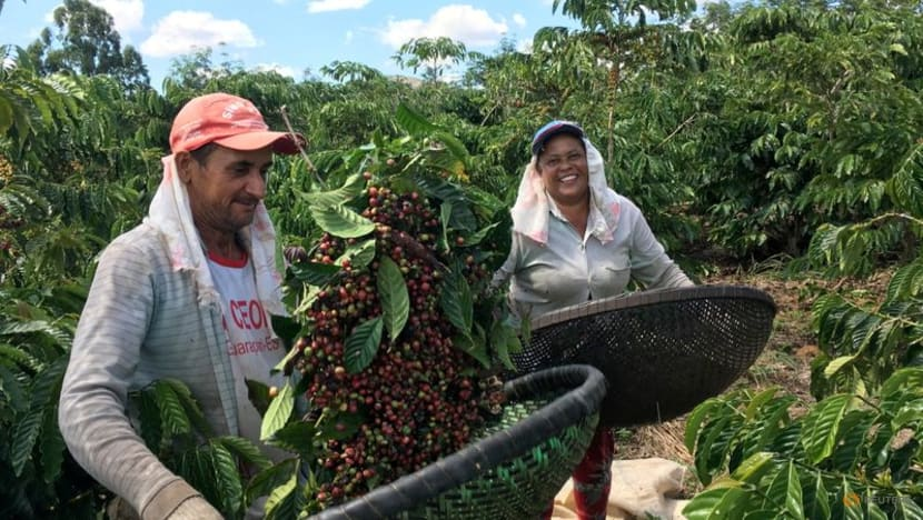 If your coffee's going downhill, blame climate change