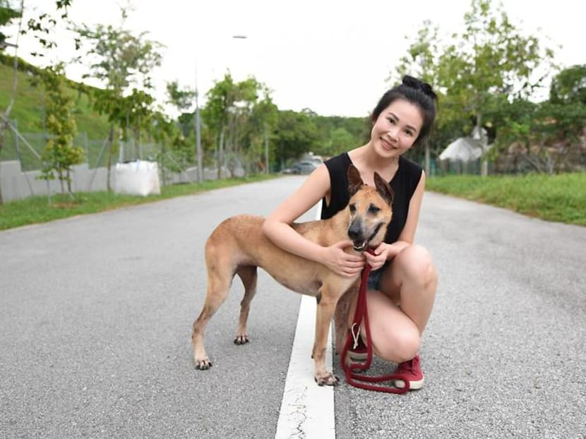 Adopt me! Meet the newly eligible rescue dogs who can now live in HDB flats
