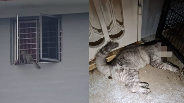 徘徊组屋窗沿 女皇镇宠物猫疑从高处跌死