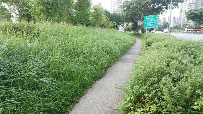 Commentary: Let Singapore's green spaces grow wild
