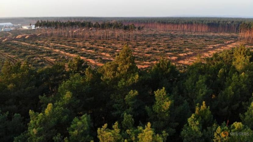 Court rejects bid to stop Tesla felling trees for German plant