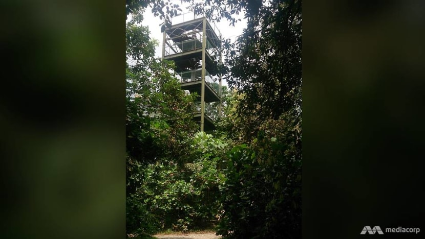 Man found dead at foot of observation tower in MacRitchie Reservoir