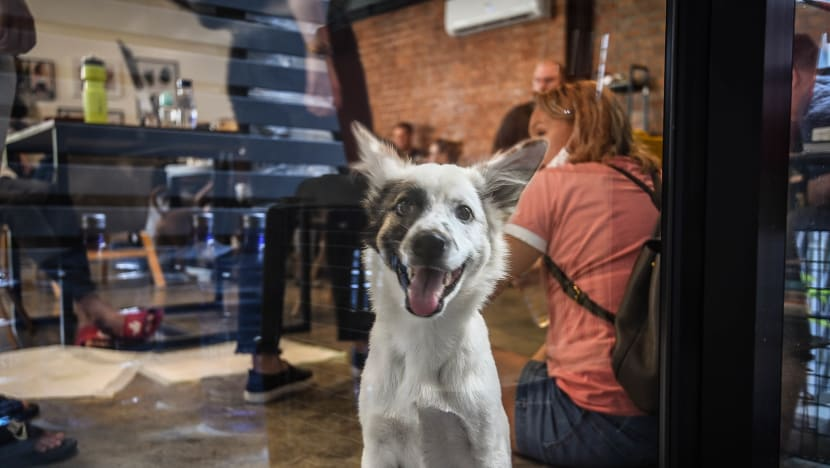 Thailand's puppy cafe helps vulnerable dogs find their forever home