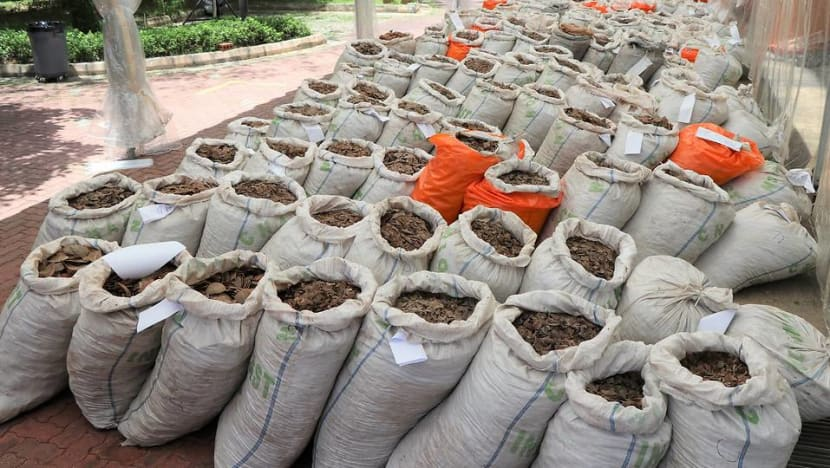 Nearly 13 tonnes of pangolin scales worth S$52 million seized in Singapore