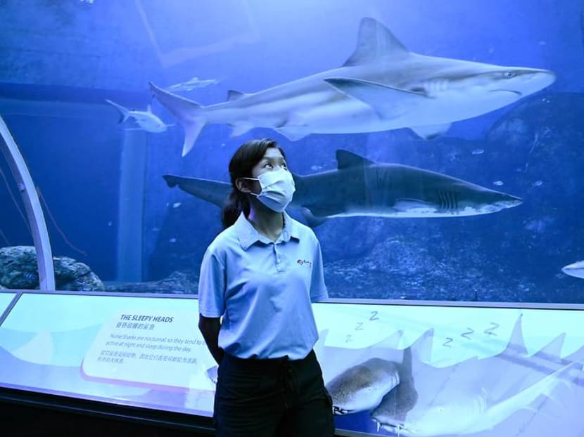 More time with the fish: Behind the scenes at the SEA Aquarium during the circuit breaker