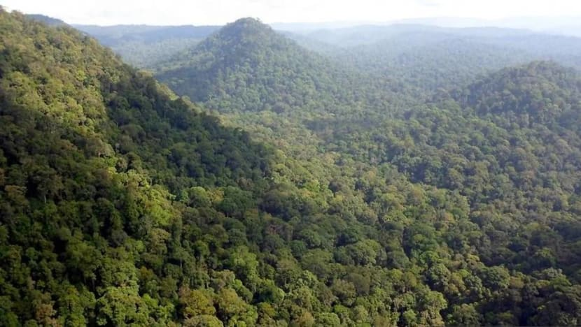 How will Malaysia's environment fare after the lifting of COVID-19 restrictions?