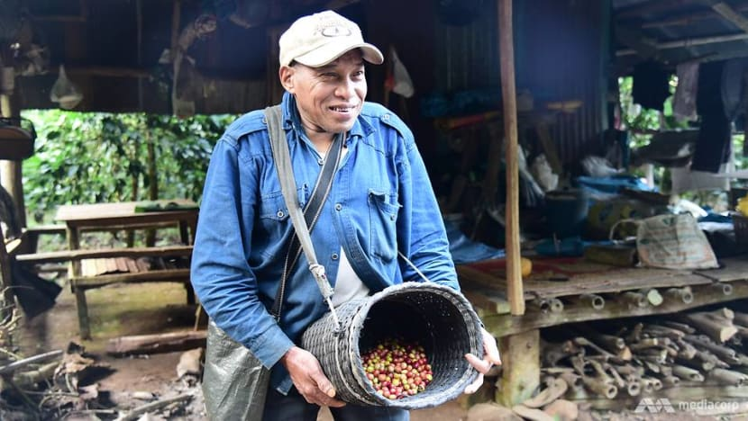 From one addiction to another: Thailand's ethnic minorities quit opium for coffee