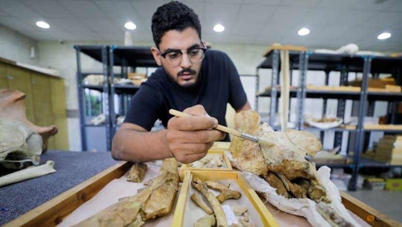 Fossil of previously unknown four-legged whale found in Egypt