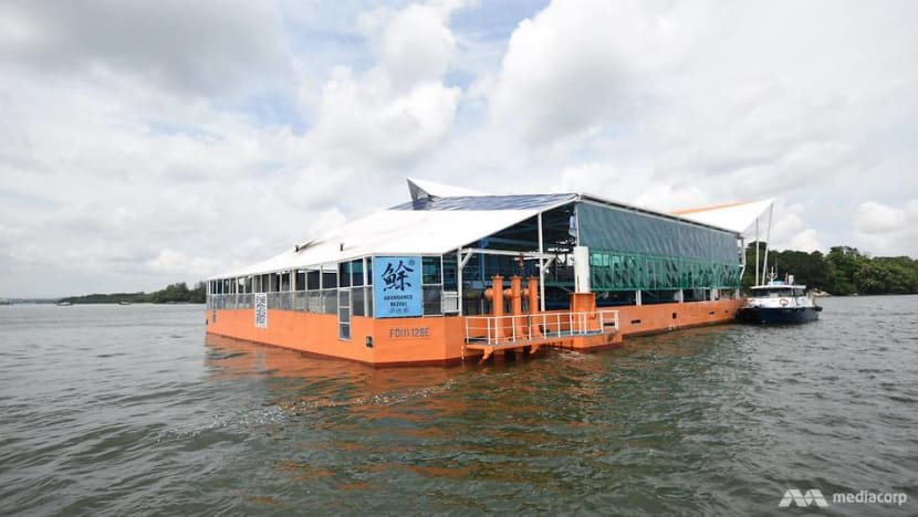 New offshore fish farm to yield up to 20 times more fish than other coastal farms
