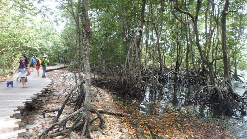 Three coastal areas proposed for conservation in Singapore Blue Plan