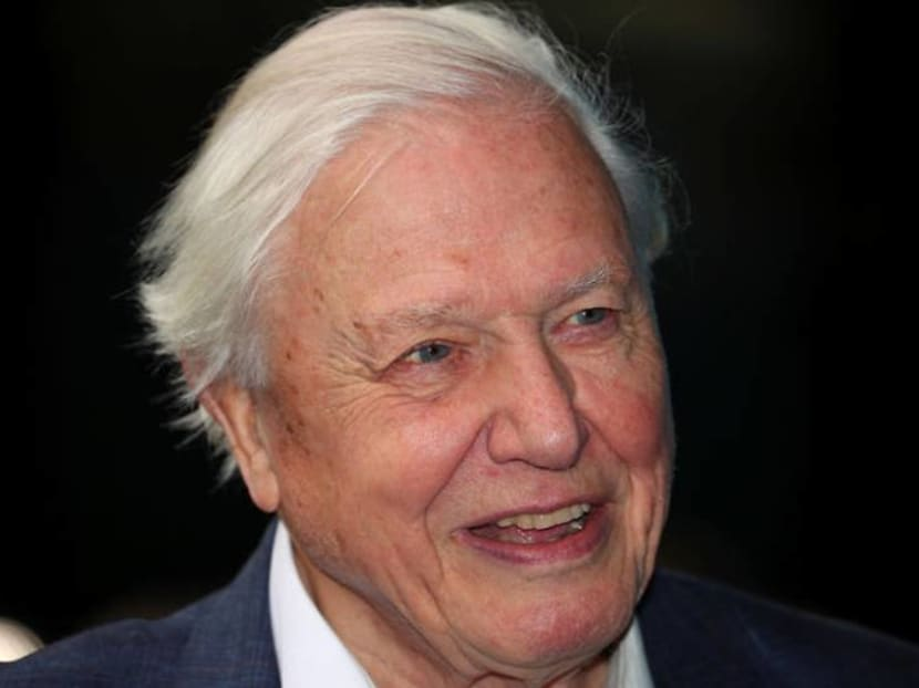 Chased by rhinos, killer bees for a TV show – what's it like working with David Attenborough?