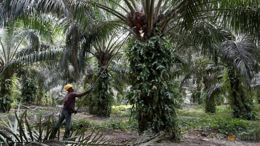 Malaysia's FGV disappointed with US ban on its palm oil products