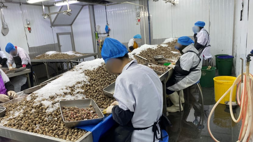 SFA suspends operator for illegally processing cockles, storing food products