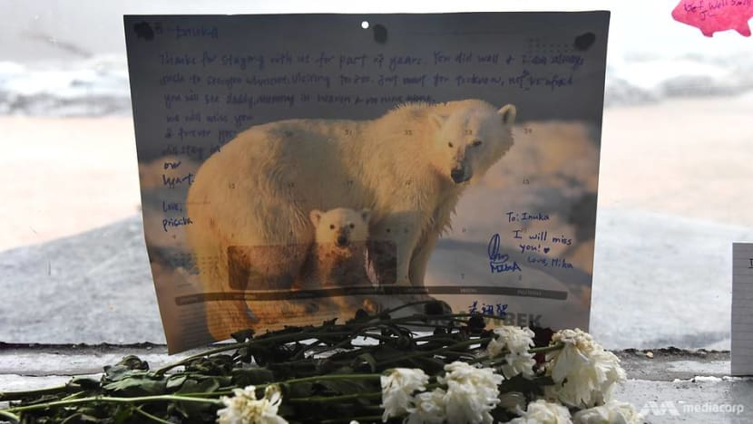 Commentary: What next after our outpouring of polar bear grief?