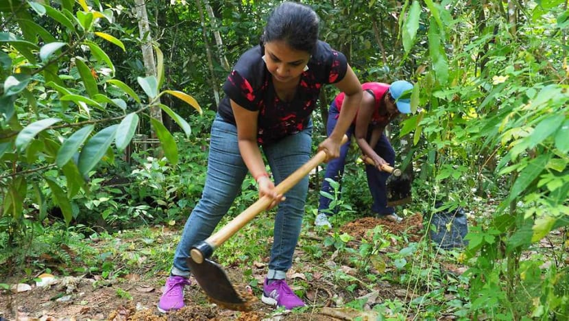 Native species, community engagement: Why there's more to planting trees than digging and watering