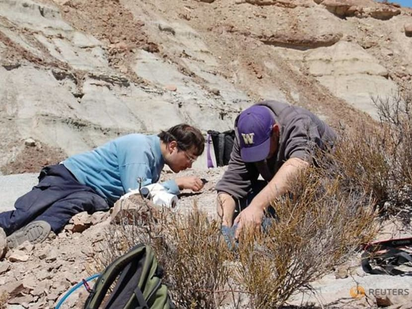 Scientists clarify origins of pterosaurs, the dinosaur era's flying reptiles
